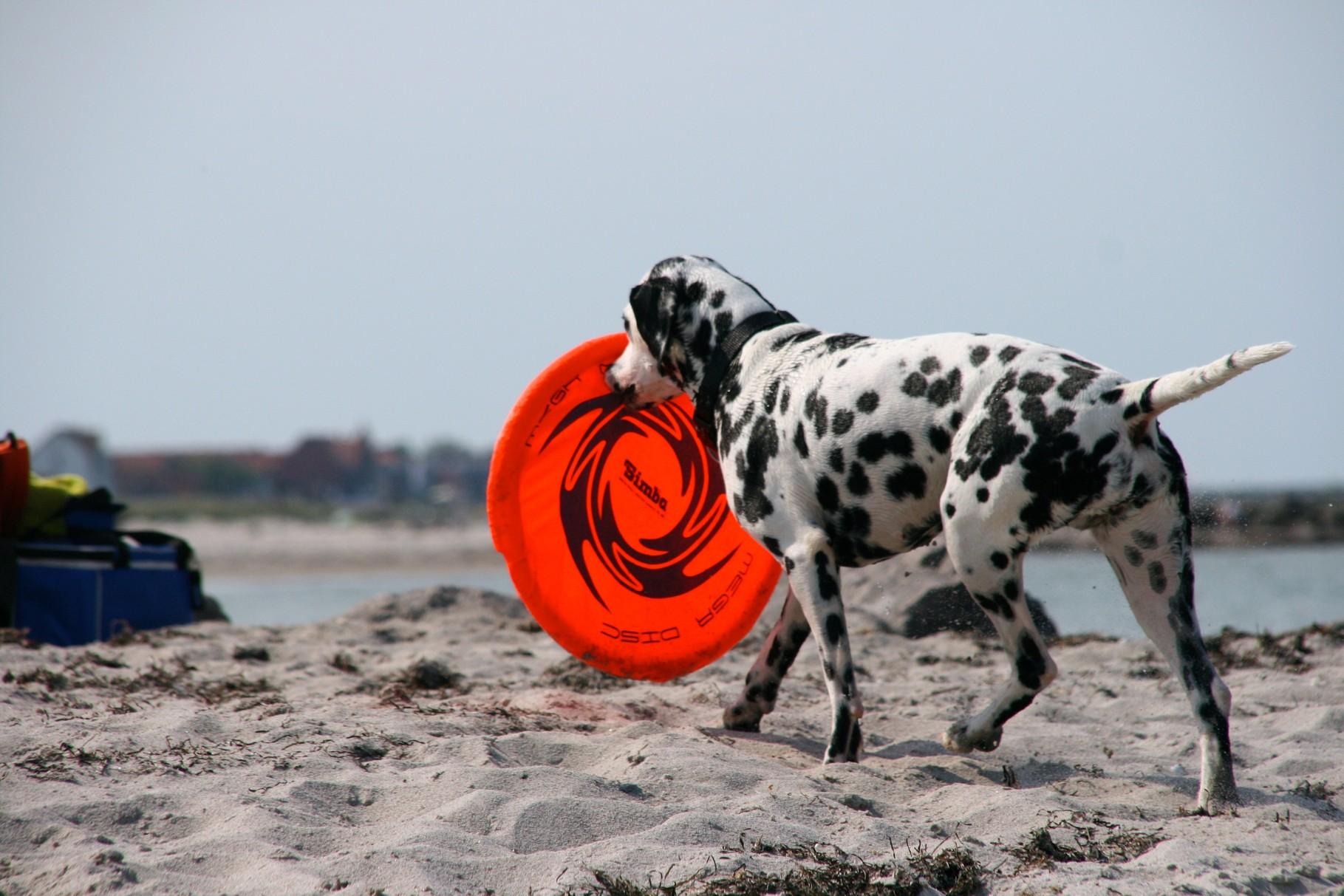 ... mit dieser Mega-Frisbee-Scheibe!!!