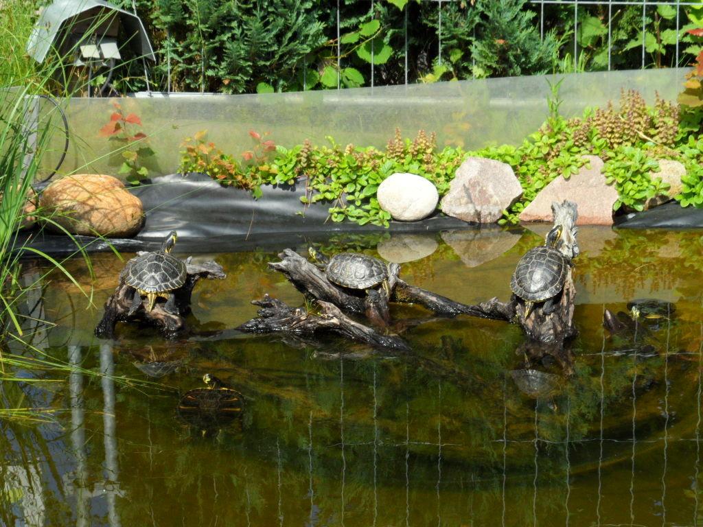 Na, die haben vielleicht ein Leben die Schildkröten ...