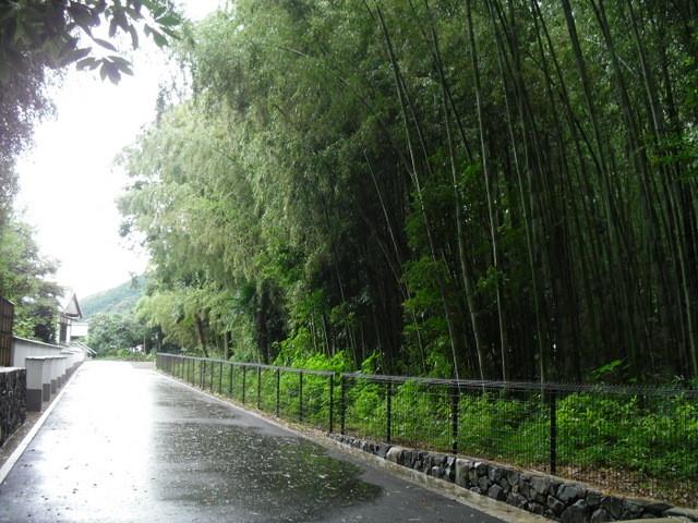 竹林公園4