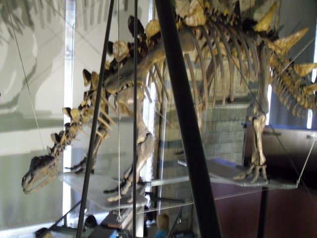 博物館の内部19
