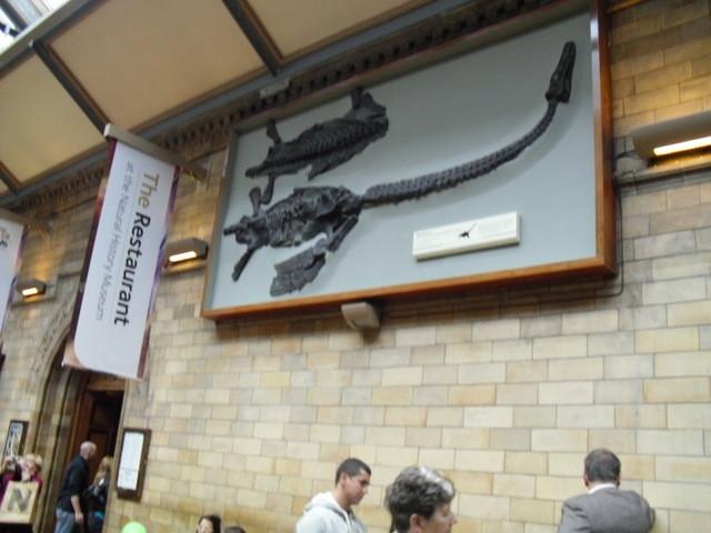 博物館の内部8