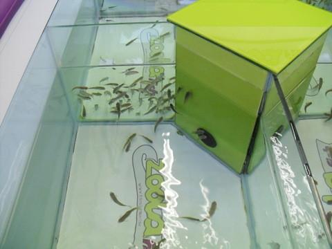 カムデン・タウン・マーケット・水槽に足を入れて魚に足の皮膚を食べてもらう店