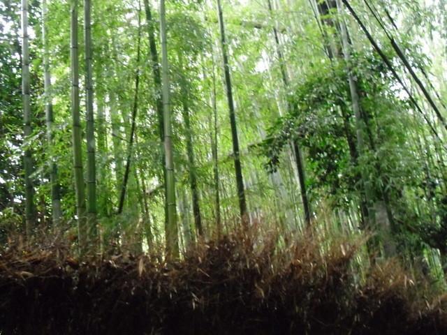 竹林公園3