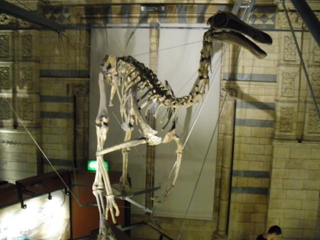 博物館の内部20