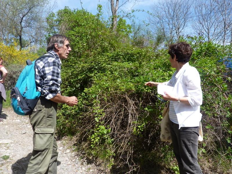 Echanges autour de la botanique et des plantes tinctoriales