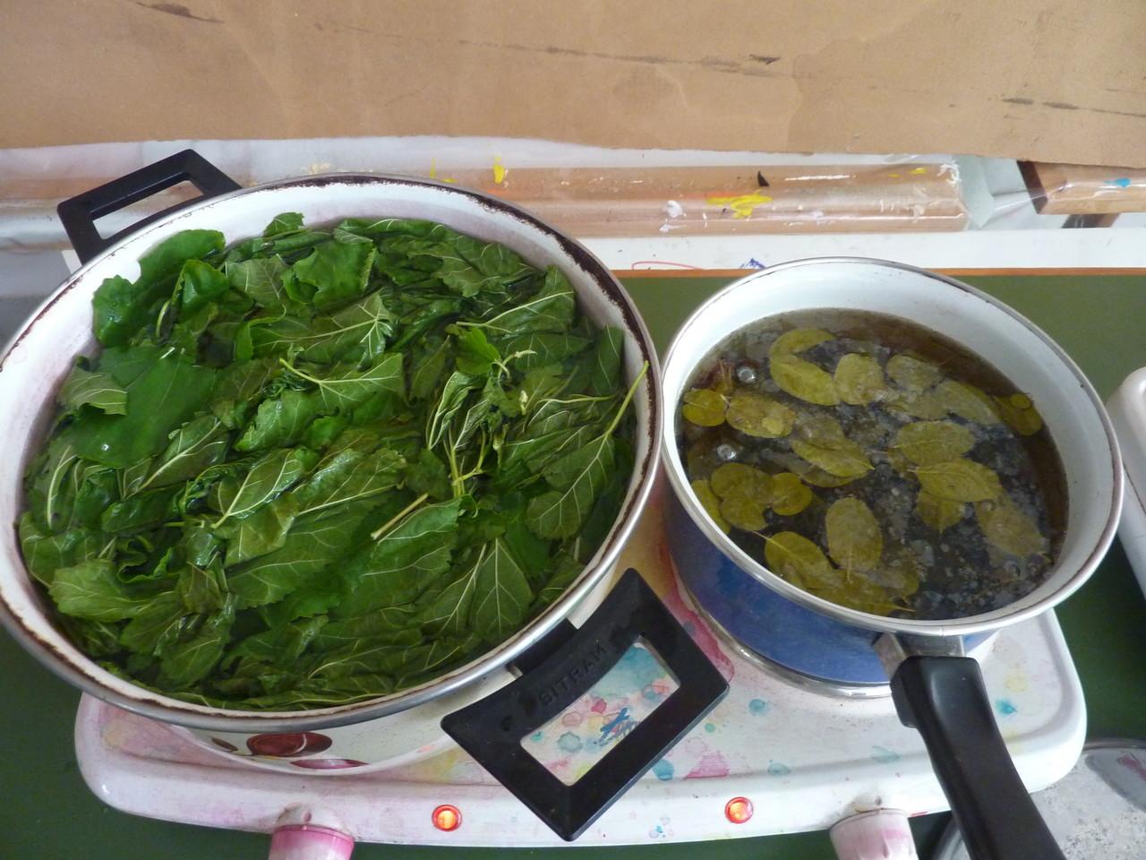 Bains de tanin de feuilles de mûrier et de feuilles d'eucalytus