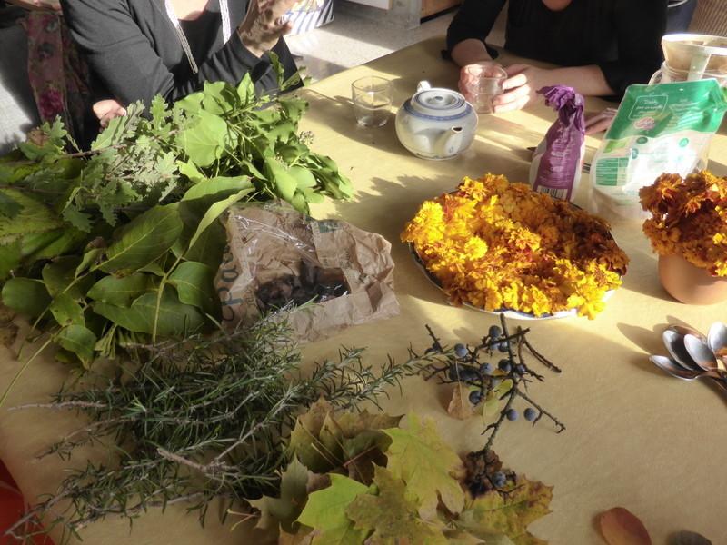 Une récolte des plantes tinctoriales saisonnières...