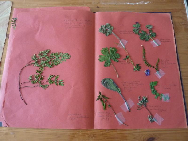 Un échantillon d'herbier réalisé lors de cette journée