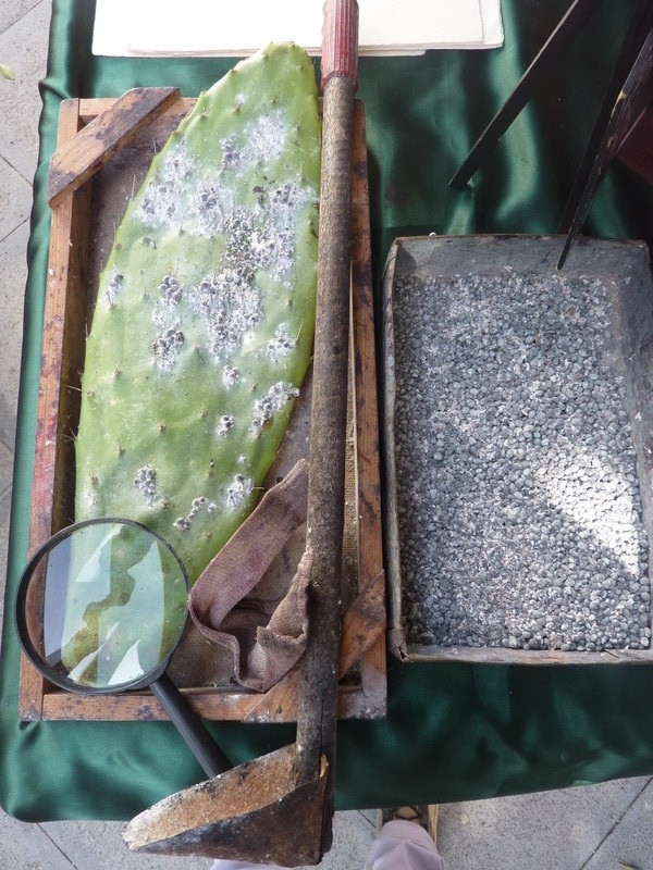"""Ensemble d'outils utilisés pour la récolte des cochenilles appelé """"Milana"""""""