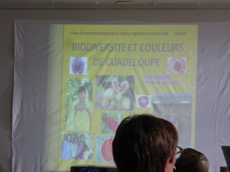 """""""Les couleurs de la Guadeloupe"""" : renouveau, innovation, production"""