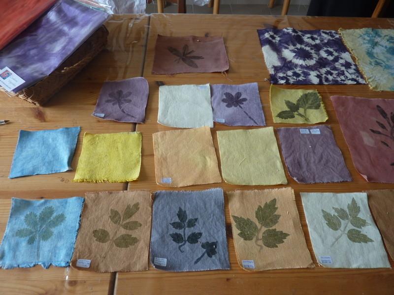 Echantillonnage d'impressions de plantes à tanin et de fonds colorés