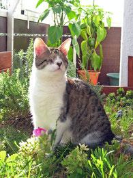 Blinde Katze, sitzend im Blumenbeet