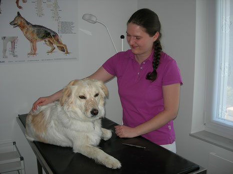 Untersuchung eines Hundes in der Tierheilpraxis mit Herz, Tübingen