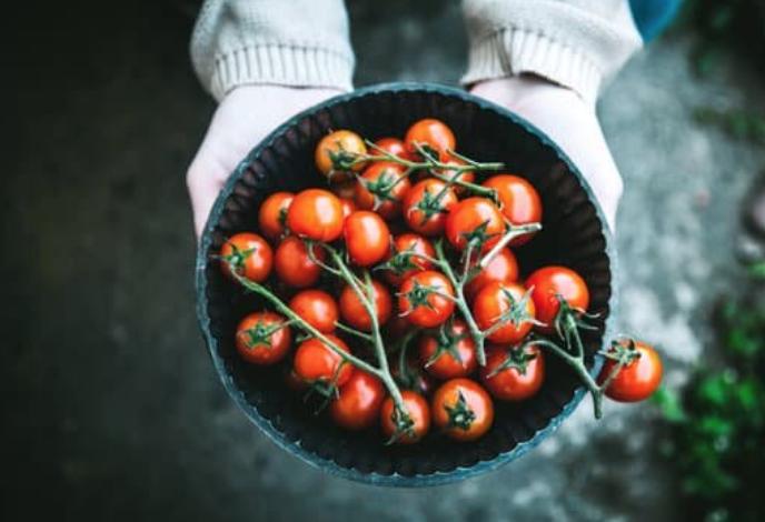 Allergie à la tomate