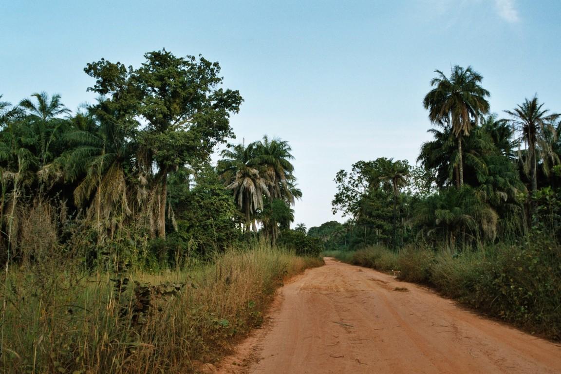 Straße im Busch