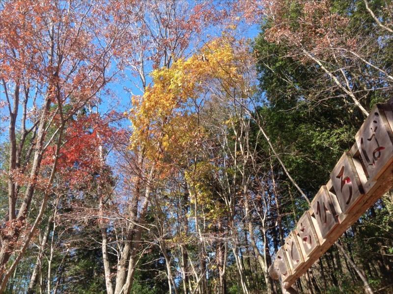 御前山ツリーハウスの森の中に信号(赤、黄、緑)の配色カラー!