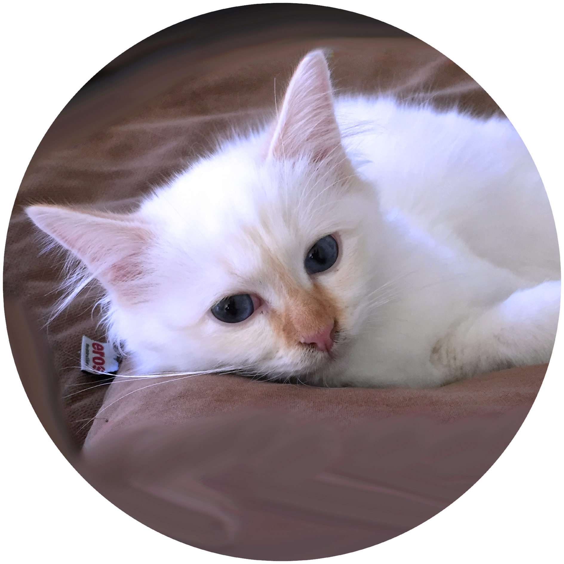 wann werden katzen das erste mal rollig