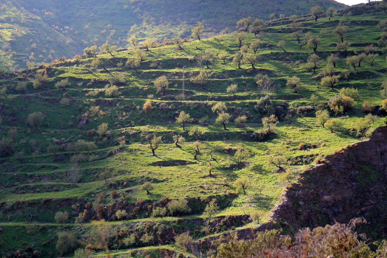 Countryside Albuñol