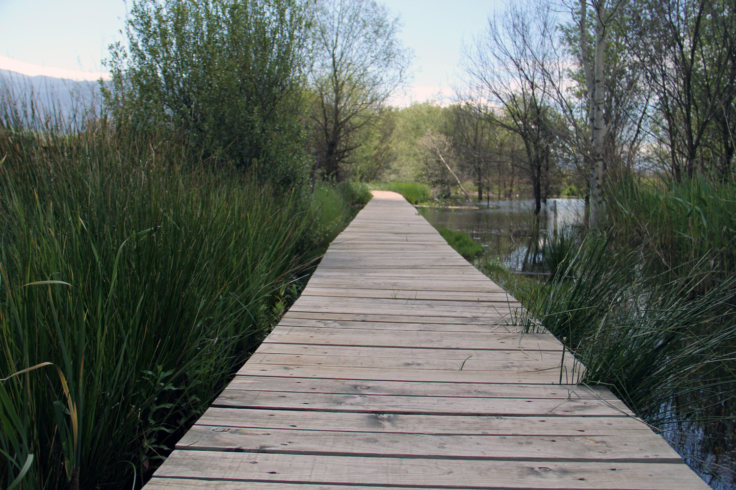 A Walking Trail in the Wetlands of El Padul