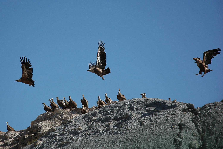 Vultures enjoying the sun