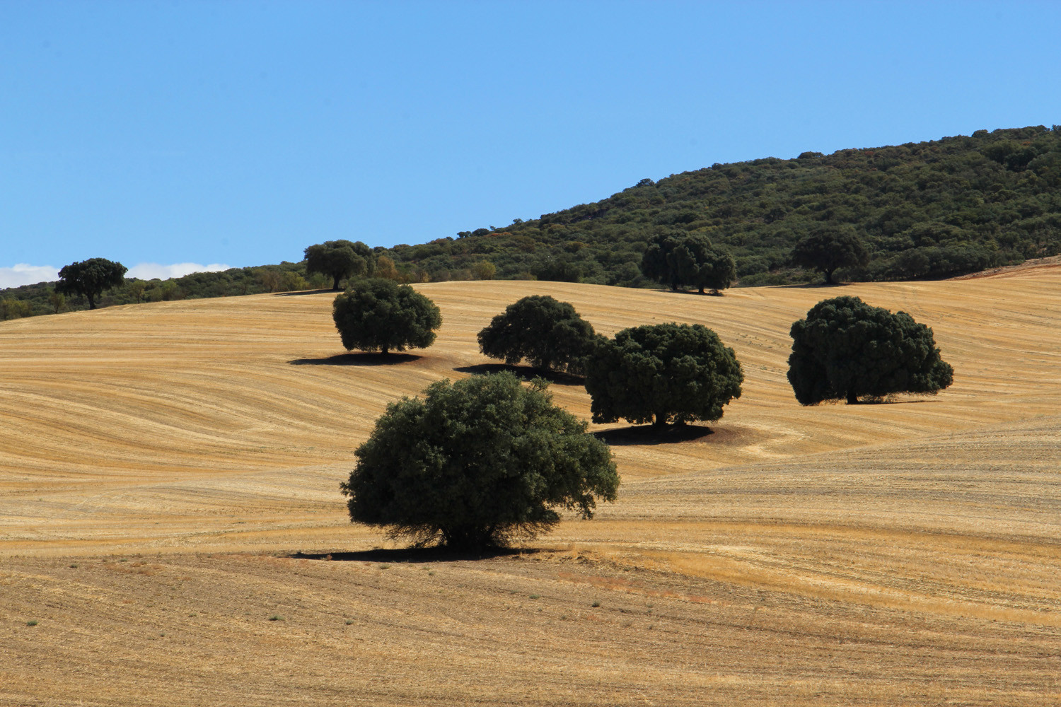The Countryside near Alhama de Granada
