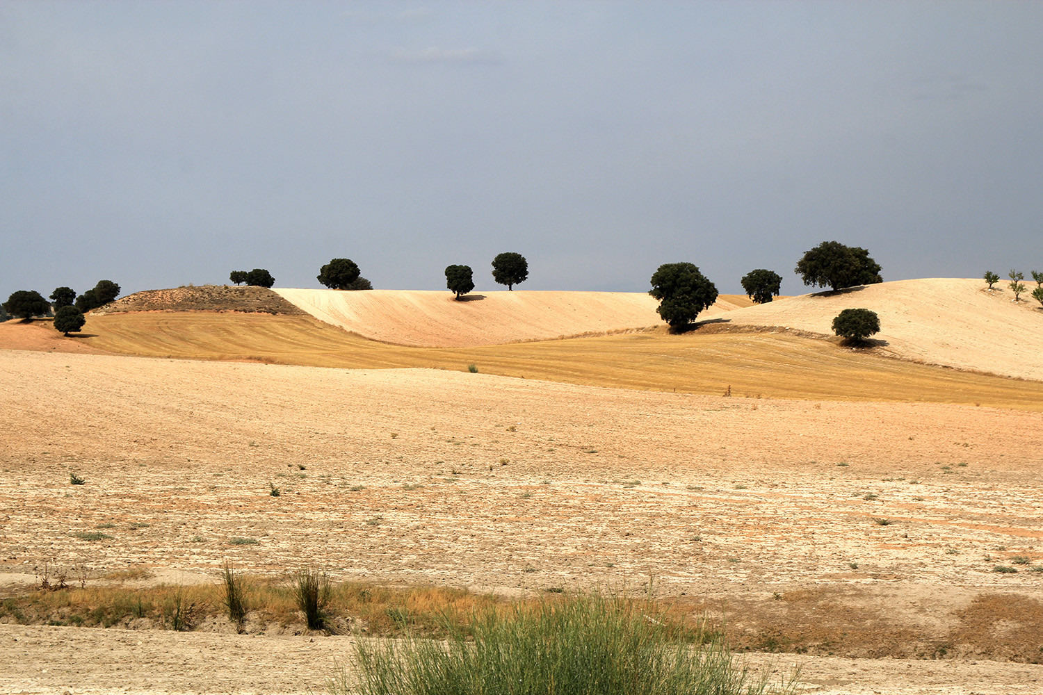 The Countryside near Pedro Martínez