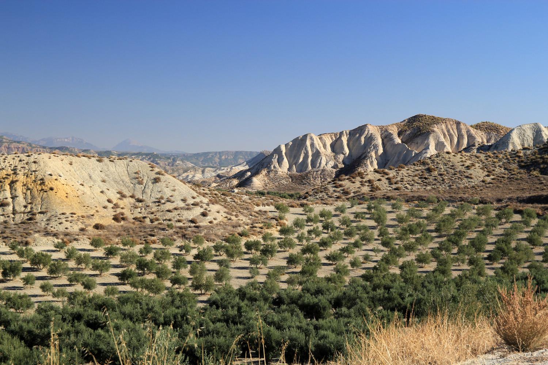 Landscape near Dehesas de Guadix