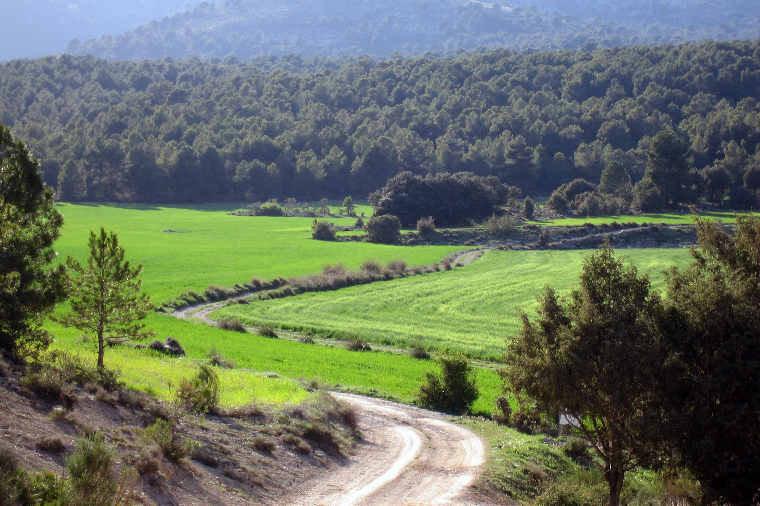 Countryside near Sierra Seca - Huéscar