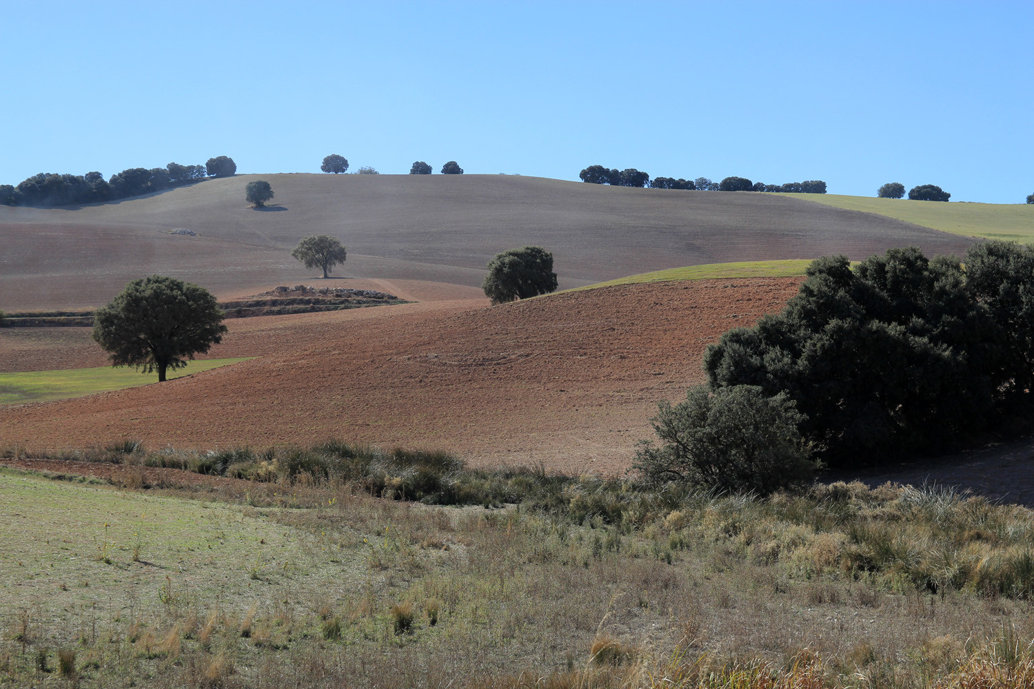 The Countryside of Guadahortuna