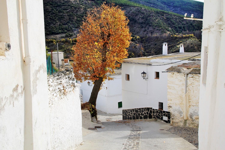 The Village Trevélez
