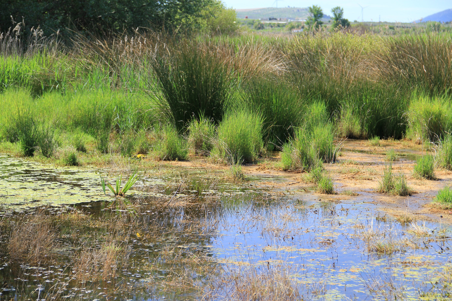 Wetlands of El Padul