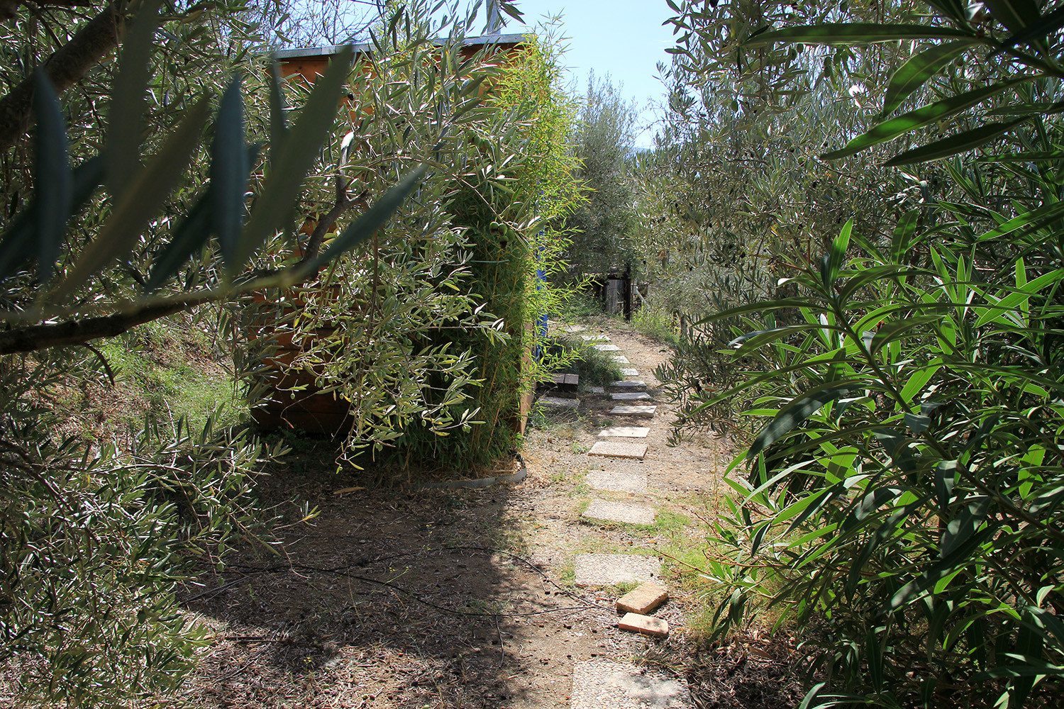 The path to the compost poo