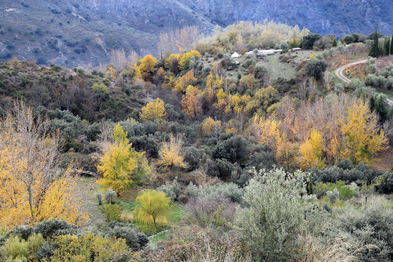 Landscape Altabéitar