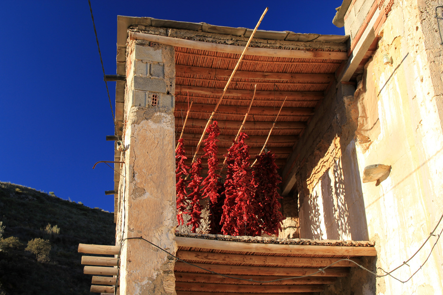 Drying Peppersin Las Canteras