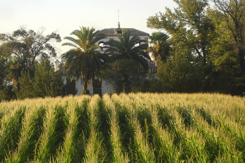 The fields around the farmhouse