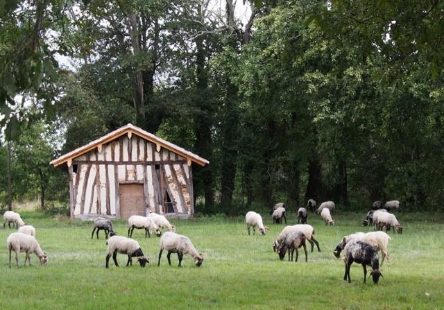 Cabane landaise à Lartigue,