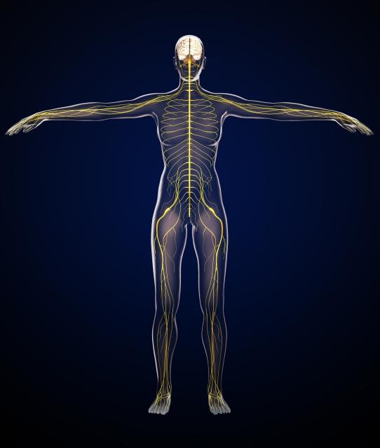 医学部進級対策 解剖学の勉強方法について
