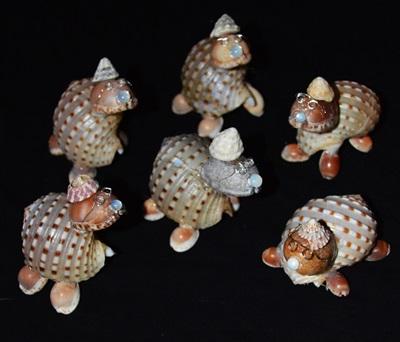 Dicke Muschel Schildkröten