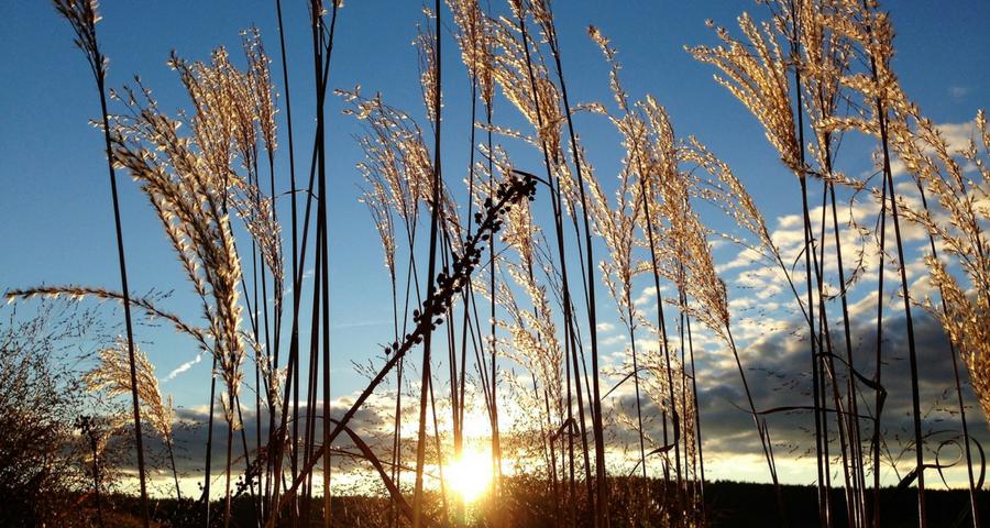 Jetzt Sonne tanken, Feld Sonne blauer Himmel