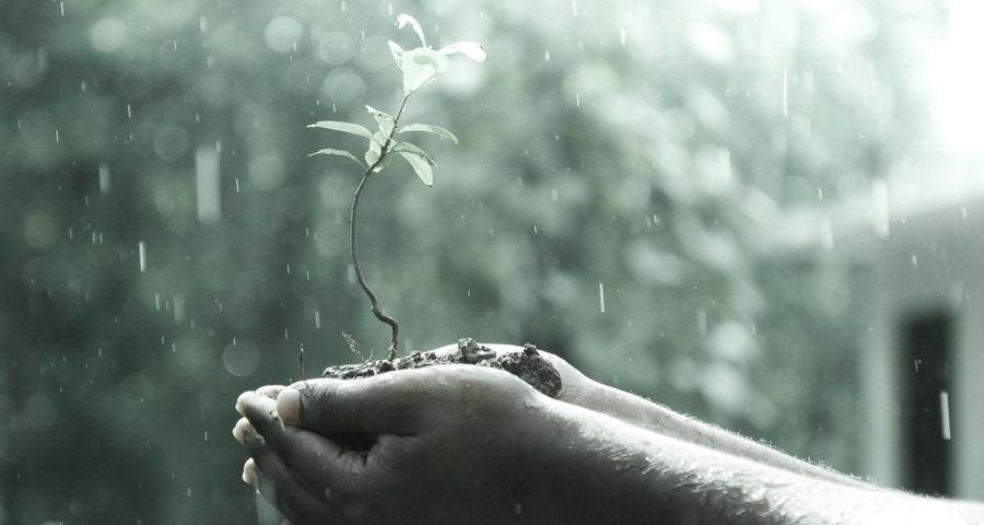 Wasser Ursprung allen Lebens.