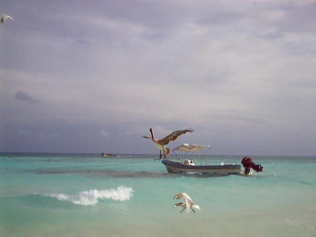 Fishing Charter Playa del Carmen - Albertos Scuba