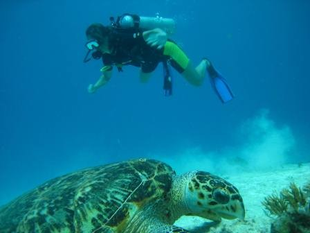 Playa del Carmen Diving with Turtles- Albertos Scuba