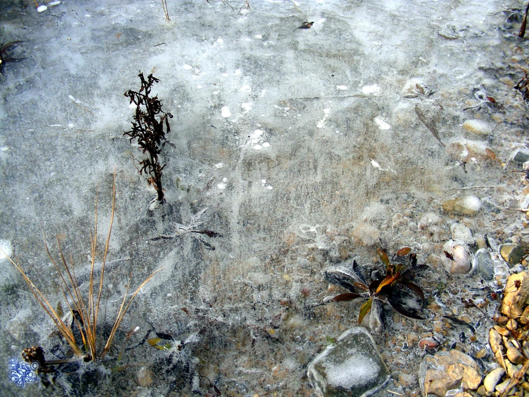 Im Aufstreben eingefrorene Luftbläschen IV
