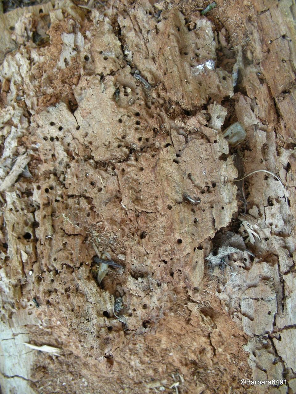 Kleinstlebewesen zersetzen das Holz zu Humus