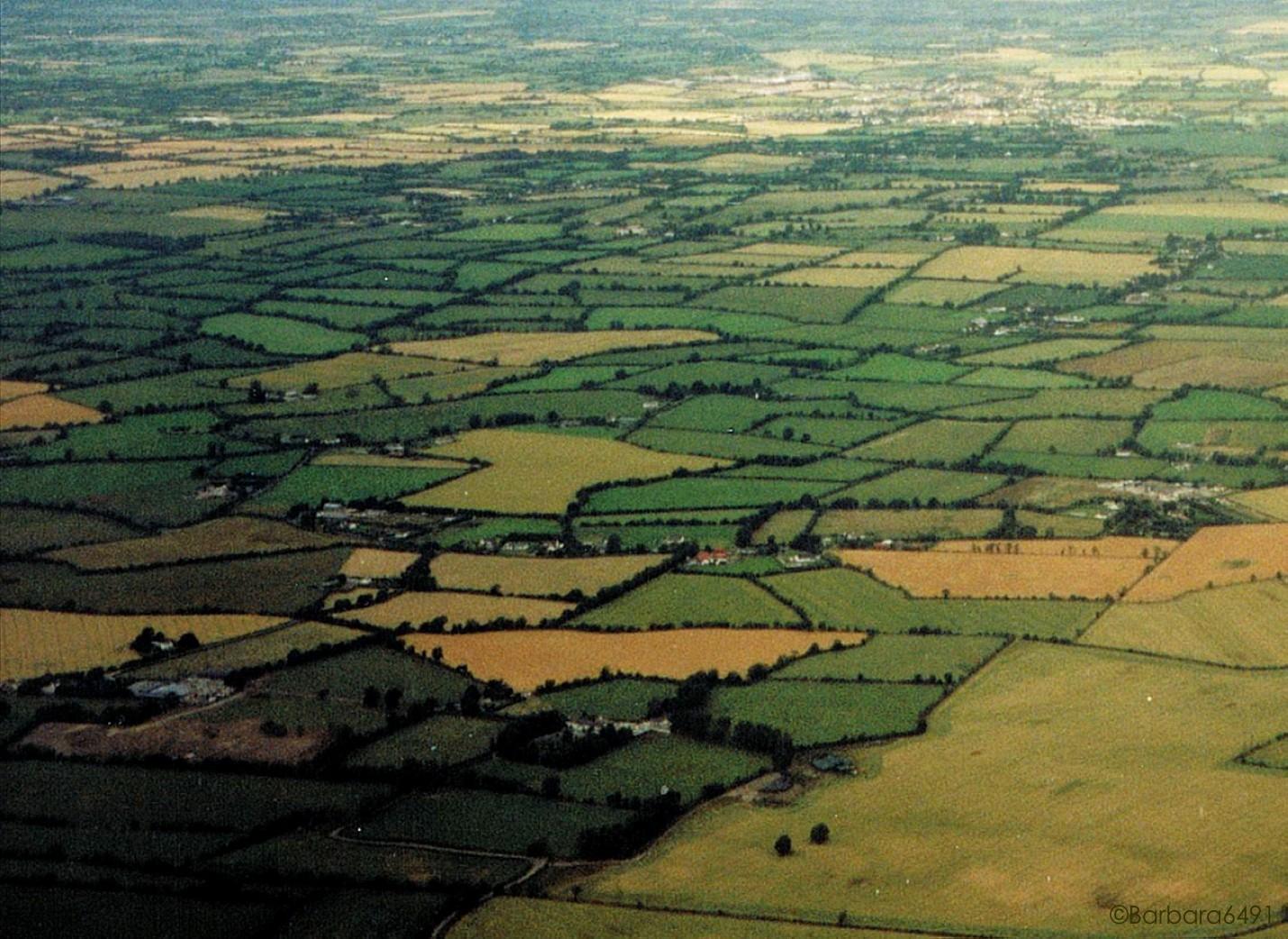 Irisches Feldermosaik