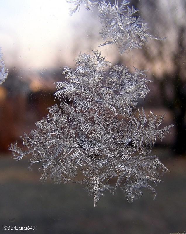 Eiskristall-Bäumchen