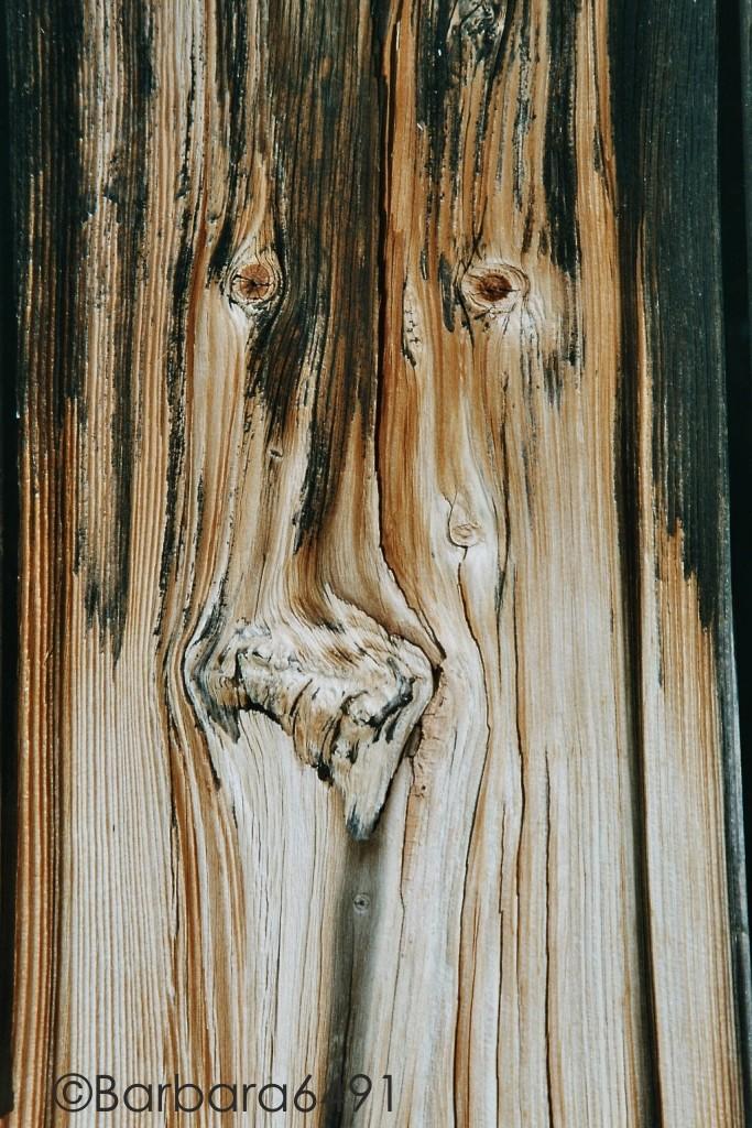 Griesgram (Holzbrett eines Bootshauses am Weißensee/Kärnten