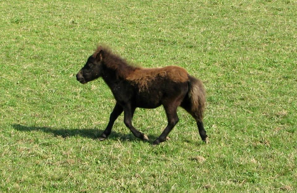 3 Monate alt, die kleine Zara