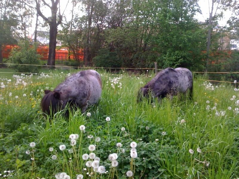 Lüssy und Jado im höche Gras