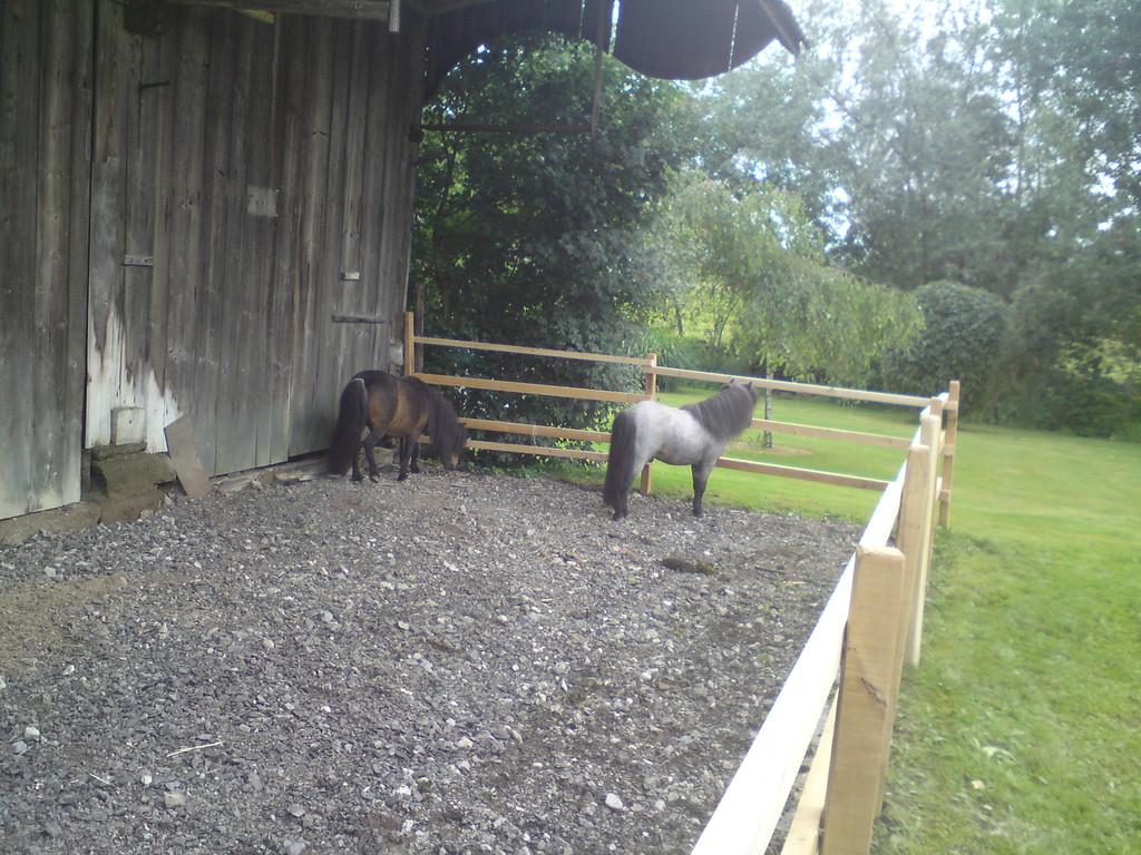 Lüssy und Winston inspizieren den neuen Auslauf